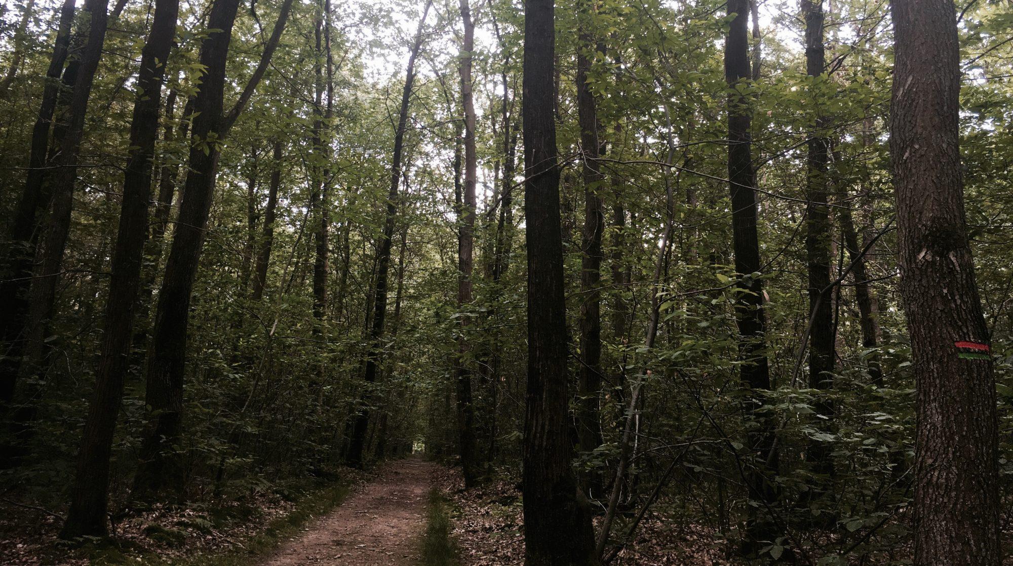 Trail Running en Vallée de Chevreuse